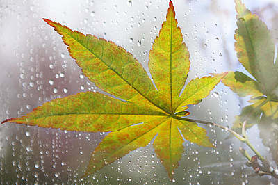 Maple Leaf And The Rain Poster by Mariola Szeliga