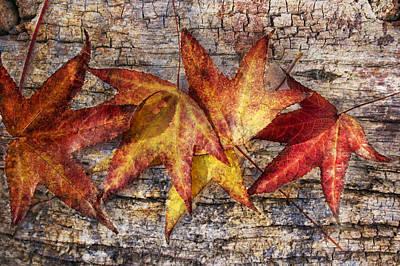 Maple Leaves Poster by Mariola Szeliga