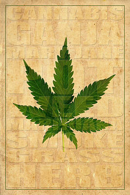 Marijuana 1 Poster by Andrew Fare