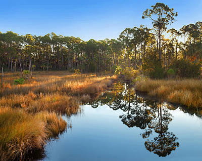 Marsh And Trees At Sunrise St Joseph Poster by Tim Fitzharris