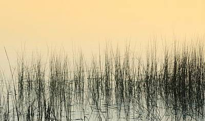 Marshlands Poster by Diana Angstadt