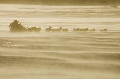 Martin Buser Runs On The Yukon River On Poster by Jeff Schultz