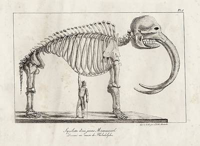 Mastodon Skeleton Poster by American Philosophical Society