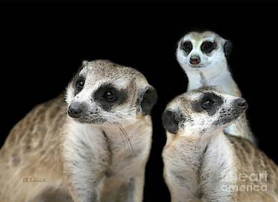 Meerkat Trio Poster by E B Schmidt