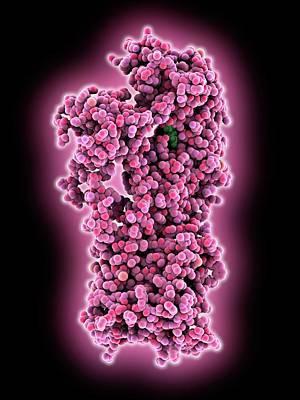 Membrane Proton Pump Poster by Laguna Design