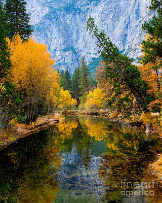 Merced River And Leaning Pine Poster by Terry Garvin