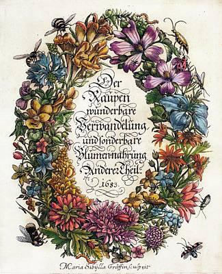 Merian's 'metamorphosis' (1683) Poster by Paul D Stewart