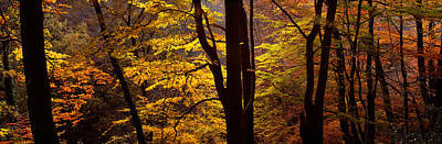 Mid Section View Of Trees, Littlebeck Poster by Panoramic Images