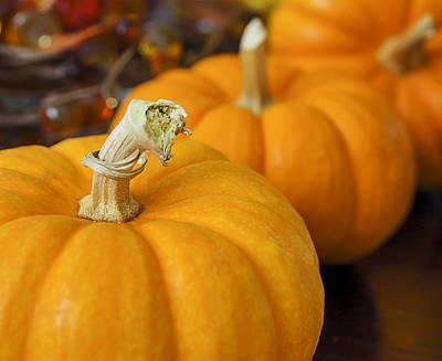 Mini Pumpkins Poster by Mariola Szeliga