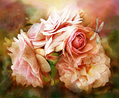 Miracle Of A Rose - Peach Poster by Carol Cavalaris