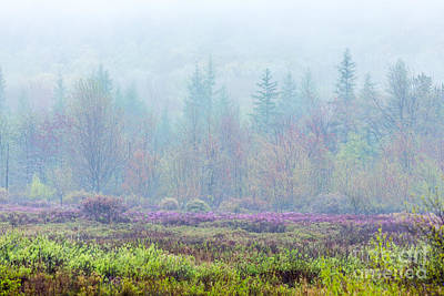 Misty Meadow In Acadia Poster by Susan Cole Kelly