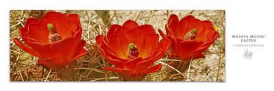 Mojave Mound Cactus Art Poster - California Collection Poster by Ben and Raisa Gertsberg