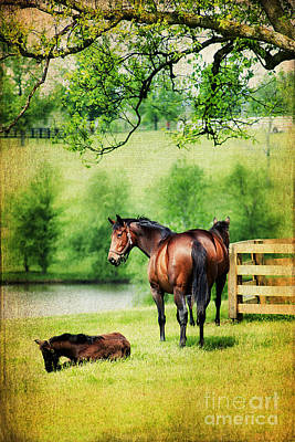 Mom And Foal Poster by Darren Fisher