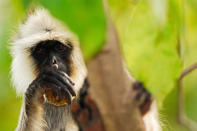 Monkey See Poster by Stefan Carpenter
