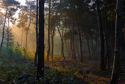 Moody Forest Happy Sun Poster by Semmick Photo