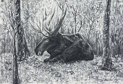Moose At Rest Poster by Christine Schwander