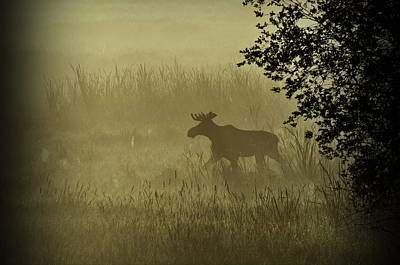 Moose In The Mist Poster by Annie Pflueger
