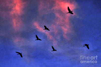 Morning Flight Poster by Darren Fisher