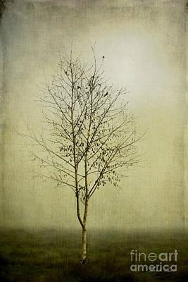 Morning Fog Poster by Linda Lees