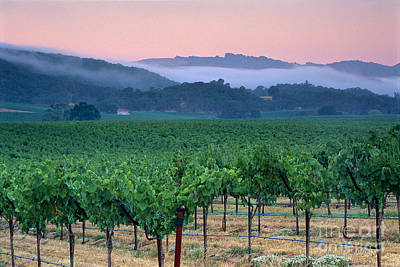 Morning Fog Over Vineyards In The Alexander Valley  Poster by Gary Crabbe