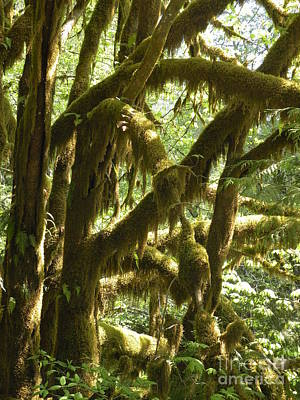 Moss Forest Poster by Val Carosella
