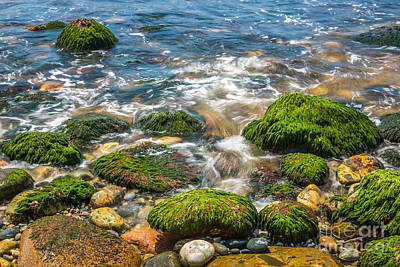 Mossy Rocks On Hunters Beach In Acadia Poster by Susan Cole Kelly