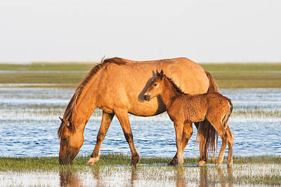 Mother And Foal Poster by Bob Decker