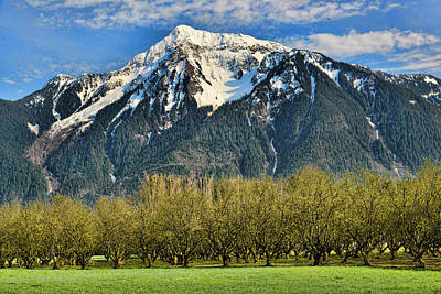 Mount Cheam From The Hazlenut Grove Agassiz Bc Poster by Lawrence Christopher