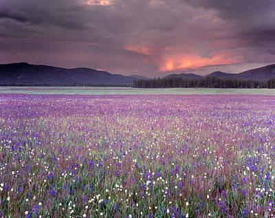 Mountain Meadow Purple Poster by Leland D Howard