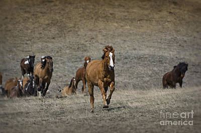 Moving On Out Poster by Wildlife Fine Art