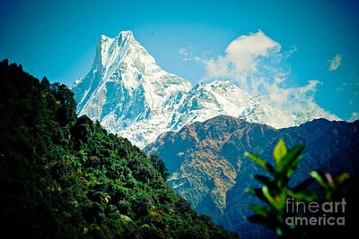Mt Machapuchare Or Fish Tail Nepal Artmif Poster by Raimond Klavins