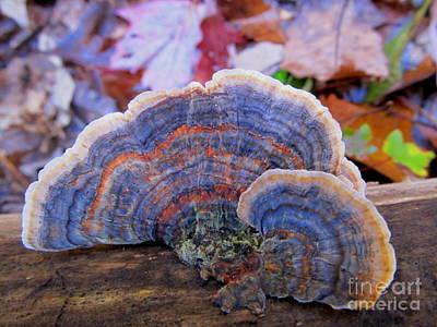 Multicolor Mushroom Poster by Joshua Bales