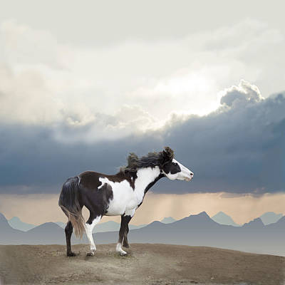 Mustang Freedom Poster by Barbara Hymer