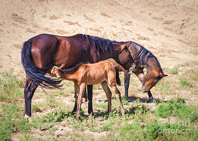 Mustang Prairie Family Poster by Janice Rae Pariza
