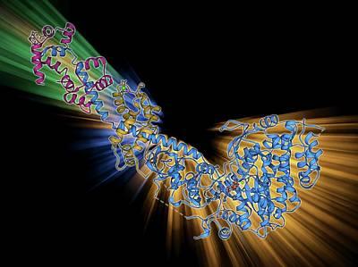 Myosin Fragment Molecule Poster by Laguna Design