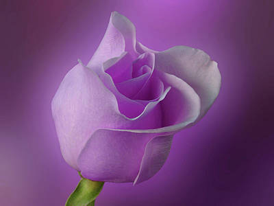 Mystical Purple Rose Poster by Sandy Keeton