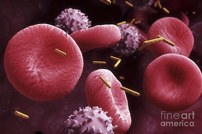 Nanorods In The Blood Poster by Science Picture Co