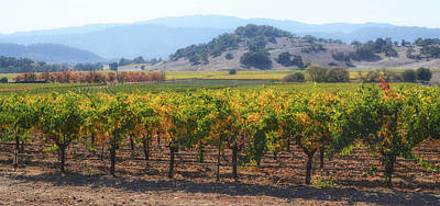 Napa Valley California Vineyard In Fall Autumn Poster by Brandon Bourdages