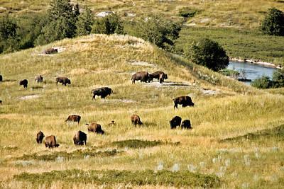 National Bison Range Moiese Mt Poster by Christine Till