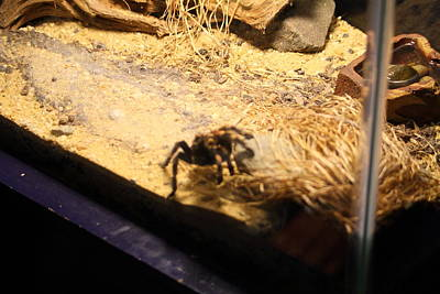 National Zoo - Spider - 01131 Poster by DC Photographer