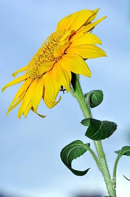 Nature's Sunshine Poster by Kaye Menner