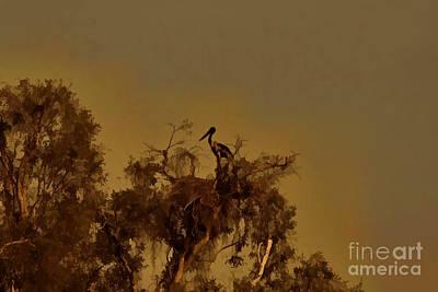 Nesting Jabiru  Poster by Douglas Barnard