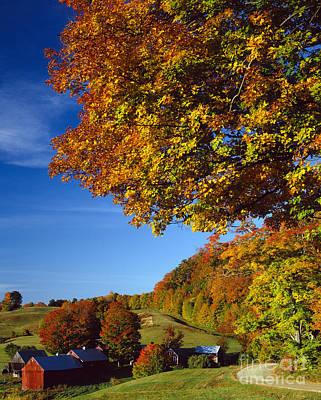 New England Autumn Poster by Rafael Macia