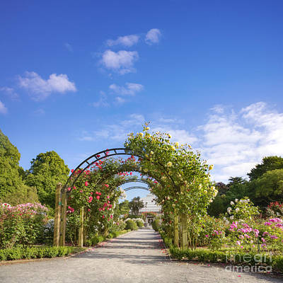 New Zealand Christchurch Hagley Park Rose Garden Summer Poster by Colin and Linda McKie