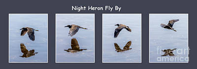 Night Heron Poster by Nancy L Marshall