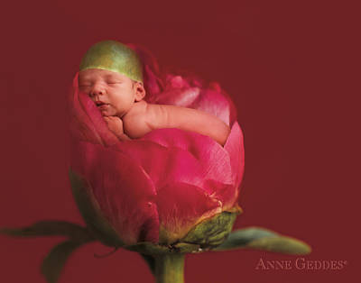 Niko In Peony Poster by Anne Geddes