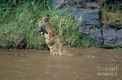 Nile Crocodile Poster by Art Wolfe