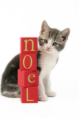 Noel Kitten Poster by Greg Cuddiford