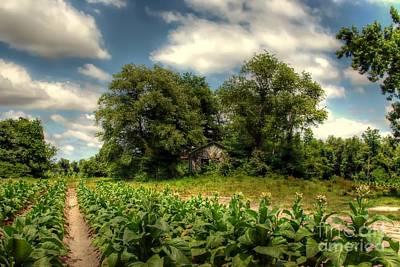 North Carolina Tobacco Farm Poster by Benanne Stiens