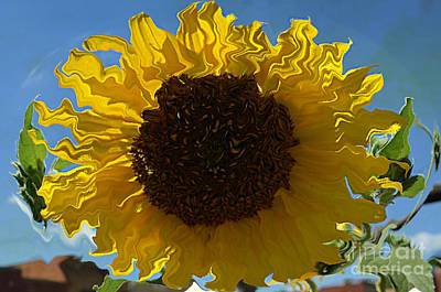 Sunflower - Not Quite Van Gogh - Luther Fine Art Poster by Luther  Fine Art